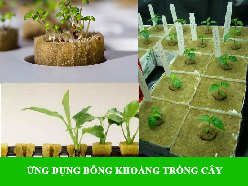 Tái chế bông khoáng để trồng cây